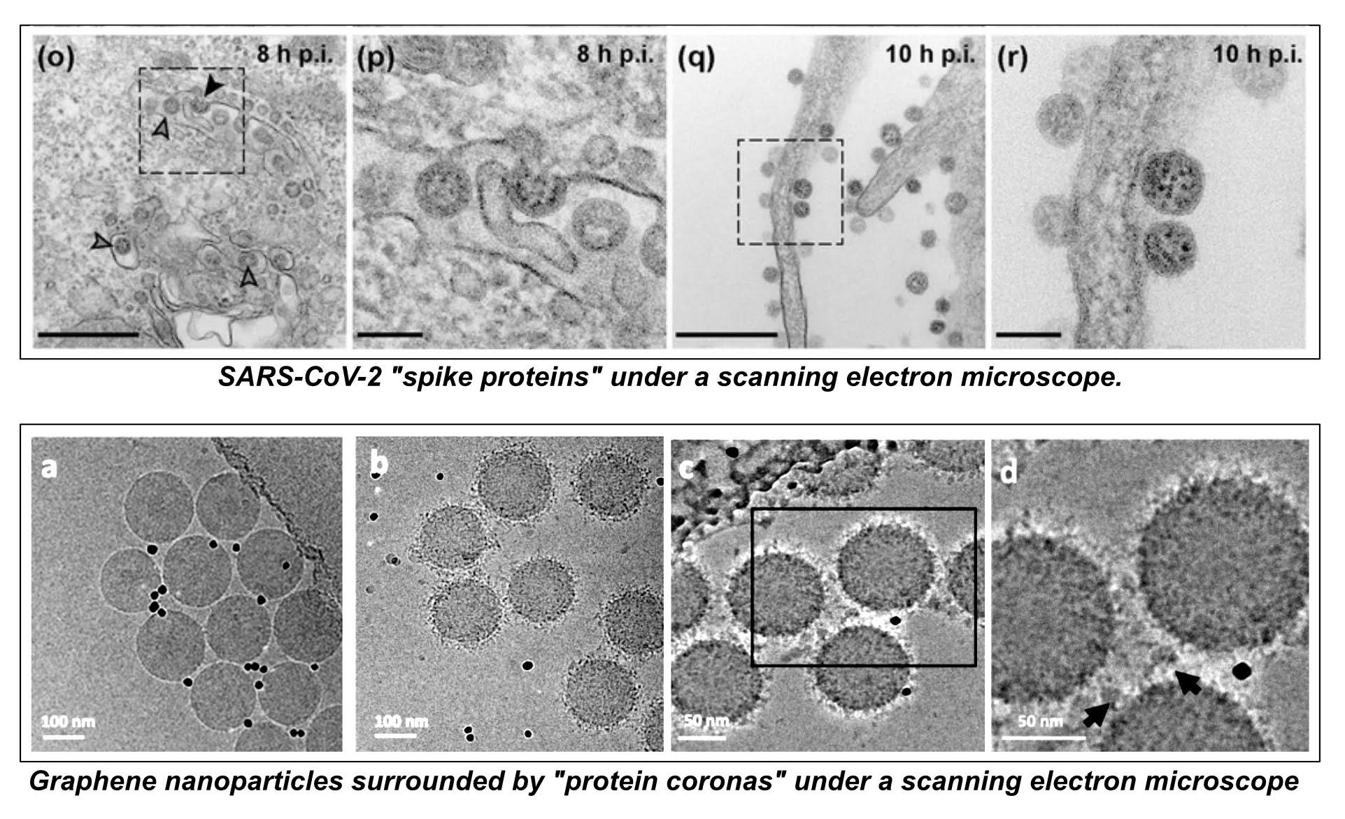 COVID-19 Vaccine Ingredients 7